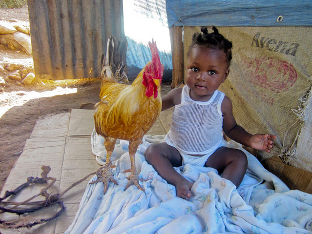Haitian-baby-5-mos.-with-rooster-in-Petionville-camp-1010-by-Jean-Louis-Benita-Plan-International, Million plus remain homeless and displaced in Haiti one year after quake, World News & Views