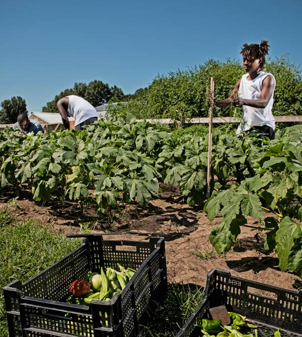 Black-farm-outside-Chicago-teaches-farming-to-Stanjamal-Bobo-Theresa-Hogan-Thundor-McDonald-by-Jefferey-Noble, Healthy food, our privilege and right, Local News & Views
