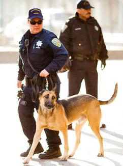 SFPD_buffed-up_cop_w_police_dog_by_Thomas_Hawk, Bringing stop and frisk to SF?, Local News & Views