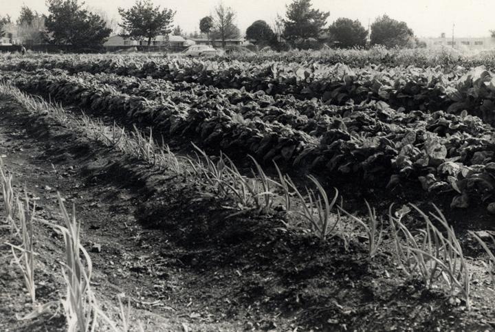 East Palo Alto Back 40 Farm 1975-GÇÿ80s-2