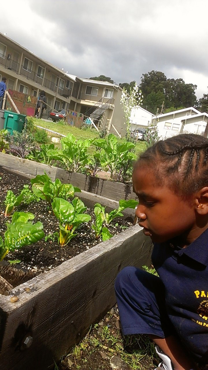 Homefulness Black child watches Pachamama garden grow