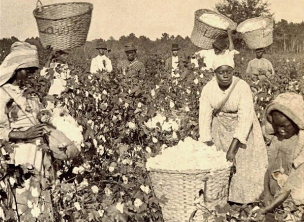 http://sfbayview.com/wp-content/uploads/2013/10/Enslaved-Blacks-picking-cotton.png