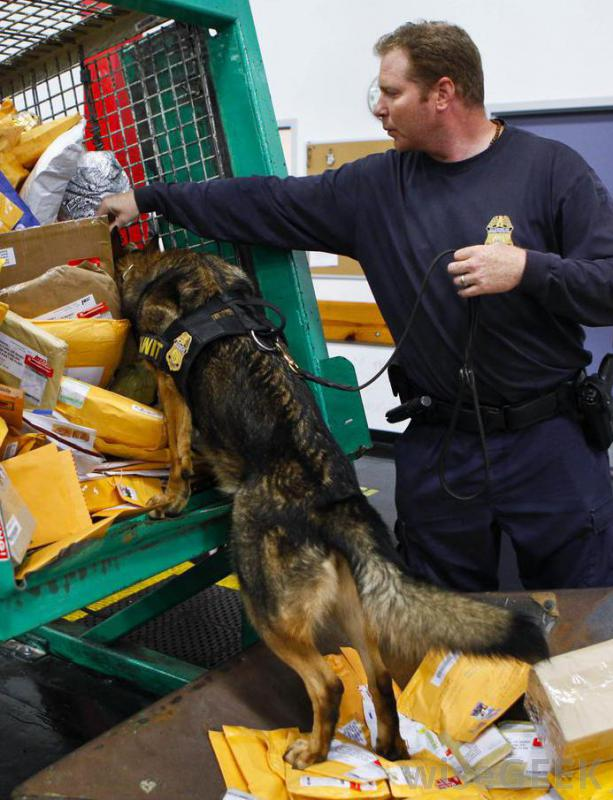 Prison mail processing guard & dog