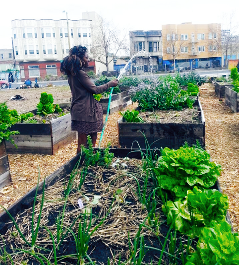 AfrikaTown-pretty-woman-watering-garden1, Cultivating resistance in AfrikaTown, West Oakland, Local News & Views