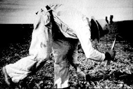 A Mexican farmworker in 1942 uses a short-handled hoe. Requiring the worker to stoop all day, the tool is now illegal.