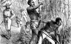 "Africans, such as those depicted in this 1858 engraving working on a British West Indies sugar cane plantation, were typically worked to death. Caribbean nations have formed a coalition to demand reparations from all their former colonial ""masters."" – Photo: Lordprice Collection, Alamy"