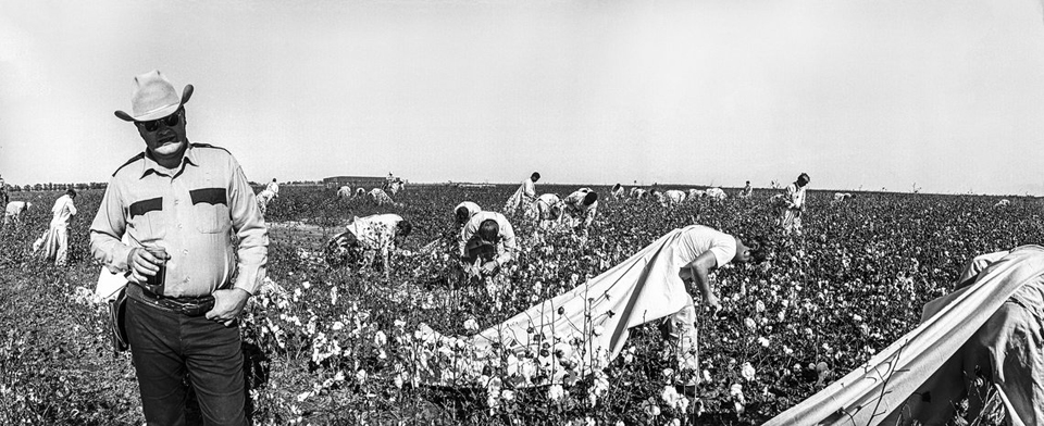 Emancipation changed little when Texas plantations were turned into prison farms. Here a field lieutenant supervises prisoners picking cotton on the Cummins Prison Farm in 1975. – Photo courtesy The Marshall Project