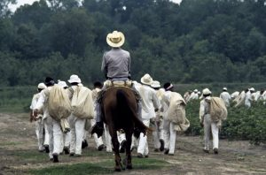 Prison slavery: Prisoners are driven to work in the fields of another former plantation in Texas, now a prison known as the Ellis Unit. – Photo courtesy The Marshall Project