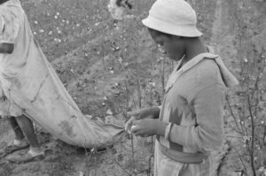 Children-picking-cotton-300x199, 'Gimmie Mines Reparations,' Fleetwood's new documentary film, Culture Currents