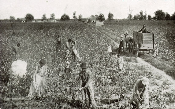 Forced-laborers-picking-cotton-Miss.-1880s-court-Slavery-by-Another-Name, US prisons practice the same slavery and racism celebrated by Confederate monuments, Behind Enemy Lines