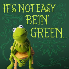 Its-not-easy-bein-green-w-Kermit, It isn't easy being a Green Party candidate in a Democratic Party town, Local News & Views