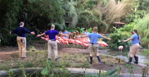 Riverbanks-Zoo-staff-herd-flamingos-to-protect-from-Hurricane-Florence-in-Columbia-SC-091318-by-WIS-300x155, National Prison Strike: State retaliates against South Carolina prisoners in the wake of Hurricane Florence, Behind Enemy Lines