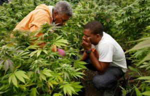 Jackie-Roberts-nephew-Raft-Hollingsworth-III-66-work-in-Hollingsworth-Cannabis-Co.-in-rural-Western-Washington-by-Erika-Schultz-Seattle-Times-300x192, If cannabis is legal in California, why are so many Black-owned cannabis businesses considered illegal?, National News & Views