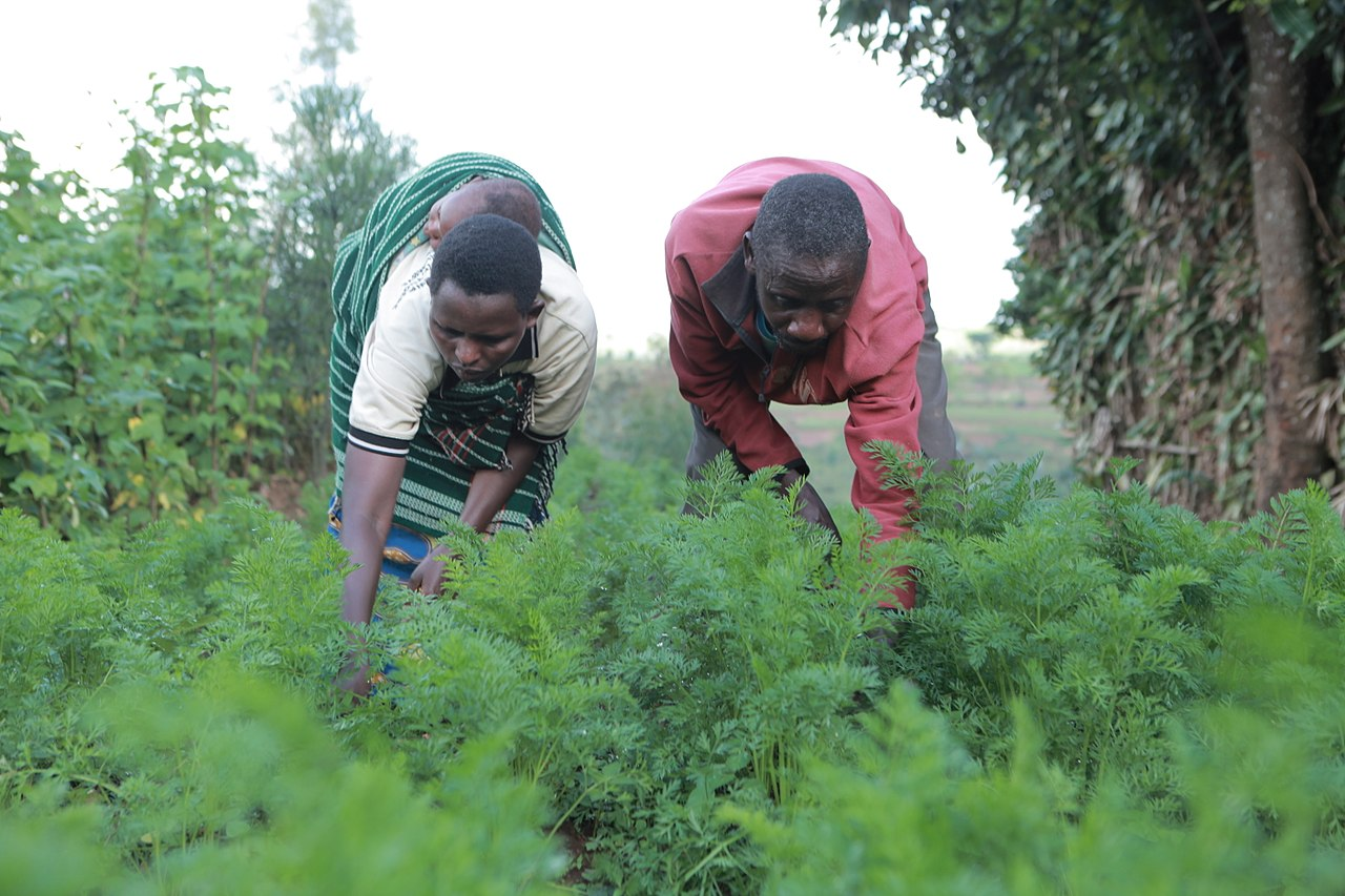 Rwanda-family-farming-Oswald-Mugisha-and-wife, Foreign aid for Rwanda, suffering for Rwandans and Congolese, World News & Views
