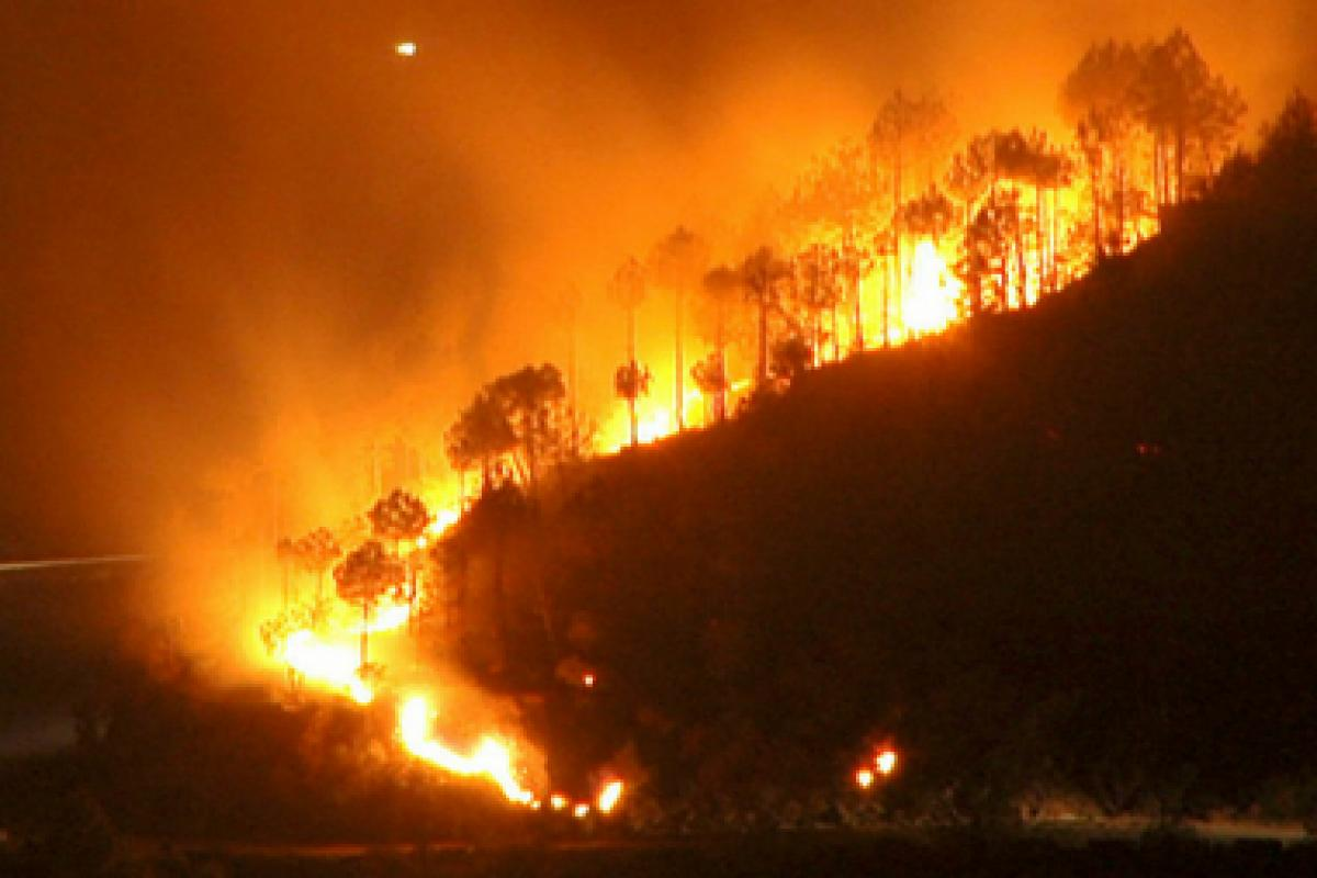 forest_fire_india_reuters, Deep reflections for a world on fire: A review of two books by Victor Wallis, Culture Currents