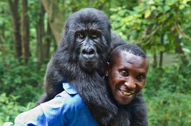 Virunga-National-Park-Congolese-Ranger-Andre-Baum's-job-is-gorilla-caretaker-2, DRC's Virunga: Park, gorillas and rangers all under attack, World News & Views