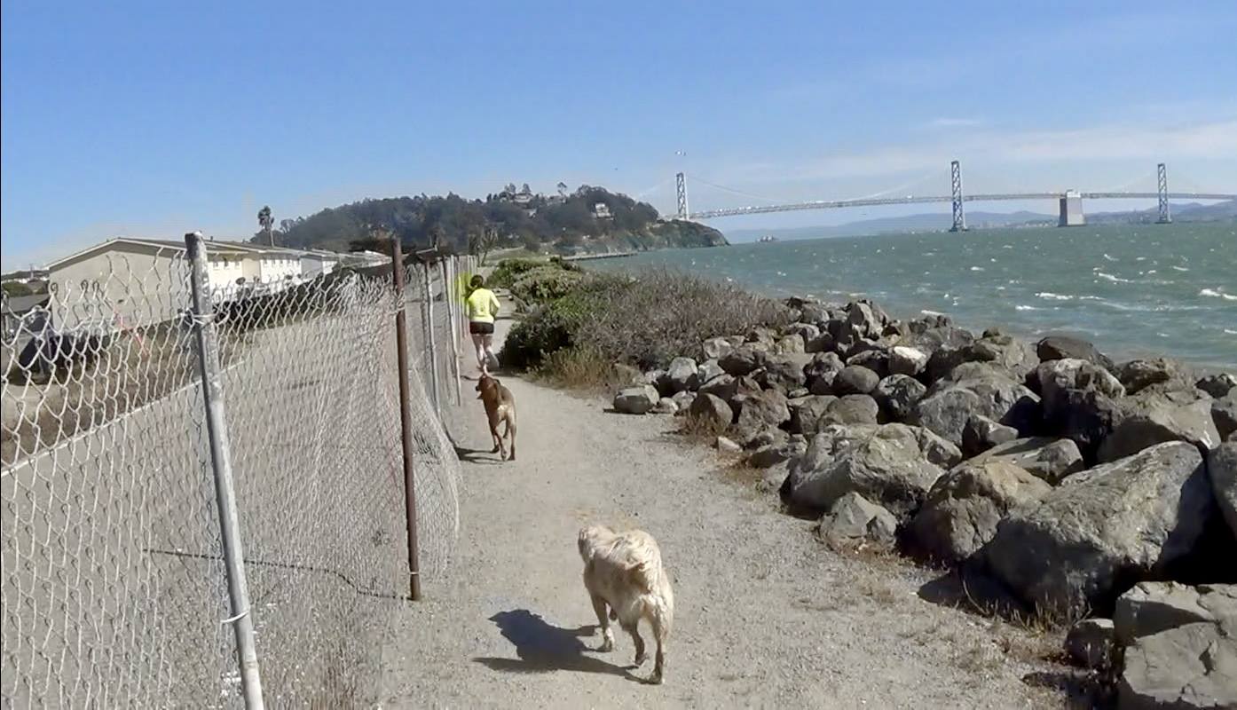 Treasure-Island-resident-jogs-w-3-dogs-next-to-radiation-cleanup-zone-across-Bay-from-SF-by-Carol-Harvey, Yes, there is intelligent life on Treasure Island, Local News & Views