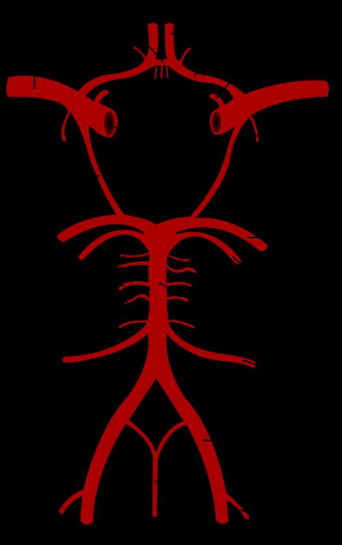 Arterial-circle-of-brain, Nekhet ankh, the life force: Kemetic Sciences Studies – an enlightenment, Culture Currents
