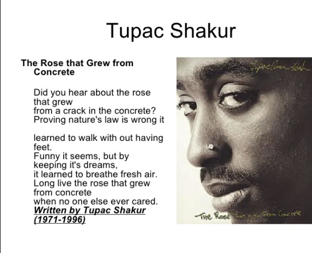 The-Rose-that-Grew-from-Concrete-by-Tupac-meme-with-portrait, Liberate the Caged Voices: The rose began to grow from concrete, Behind Enemy Lines